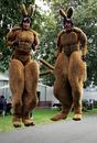 Kangeroos at the Australian Grand Prix