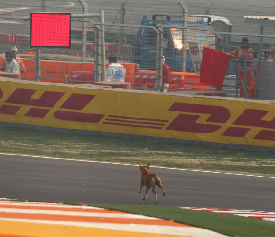 A stray dog causes a red flag early in FP1