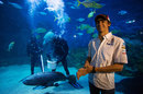 Esteban Gutierrez at Melbourne Aquarium